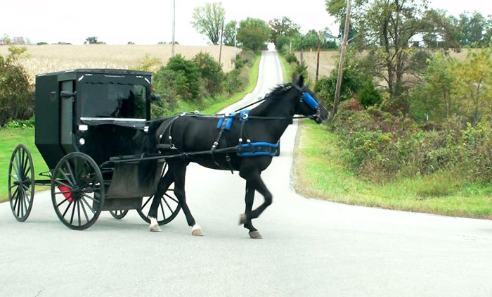 amish horse asnd buggy