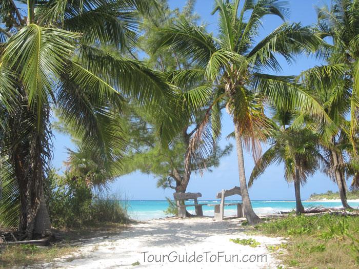 sandy beach with palm trees