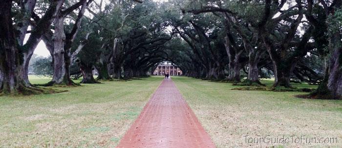 Oak Alley Plantation Oak Grove