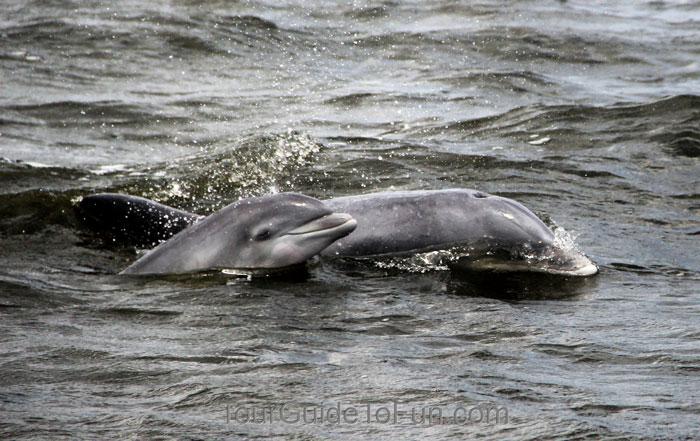 dolphin tour nags head