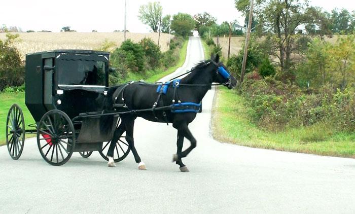 amish horse asnd buggy