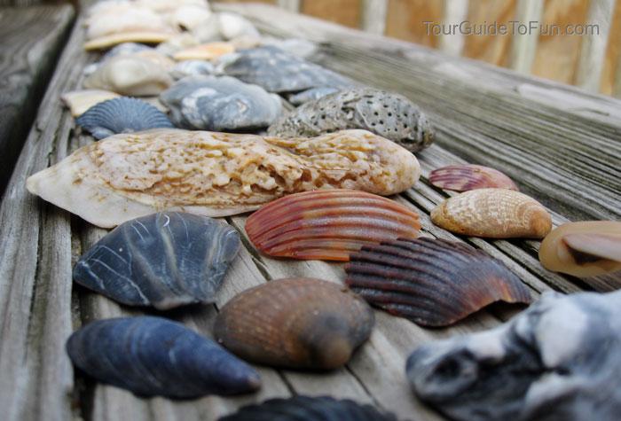 sea-shells-outer-banks